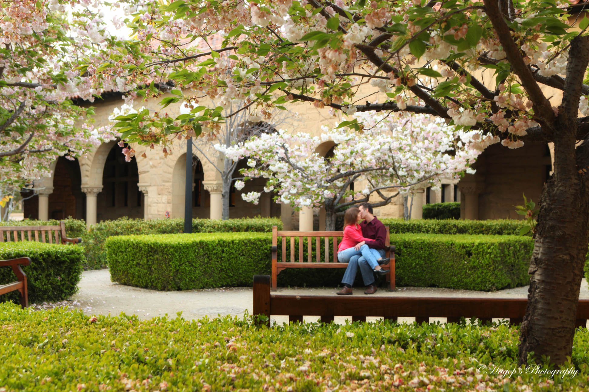engaged couple kissing at stanford campus