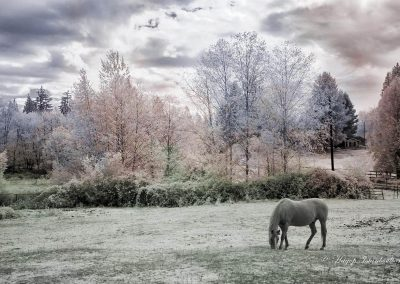 infrared photo of a horse in a field