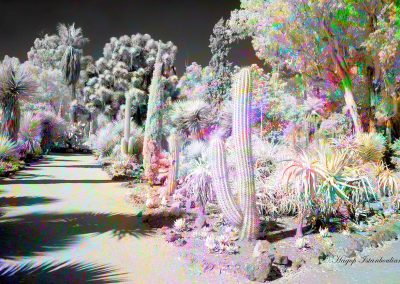 infrared desert photo